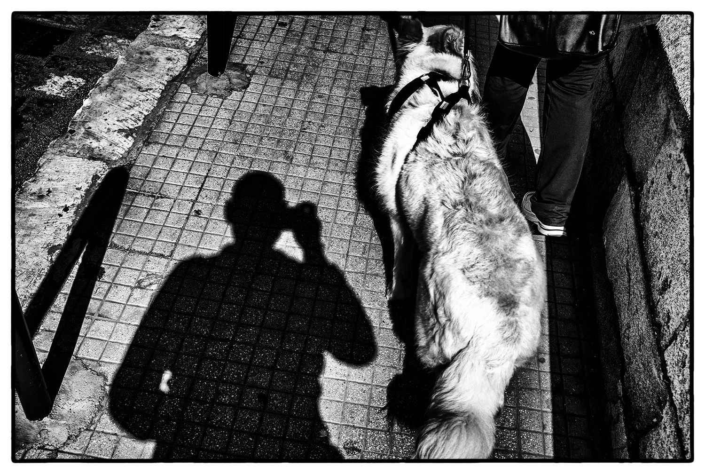 Puglia_dog