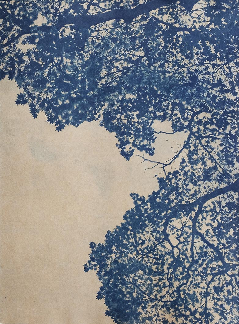 Cyanotype - Japan1