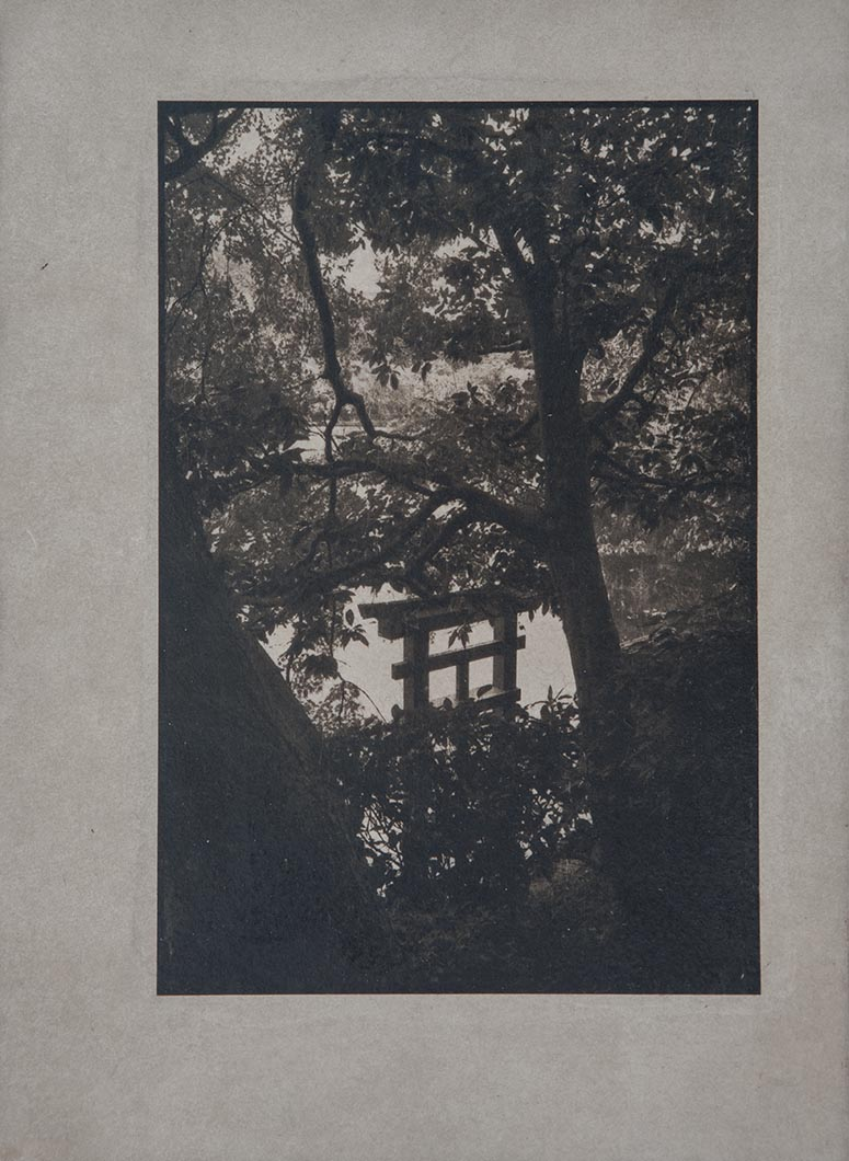 Cyanotype - Japan11
