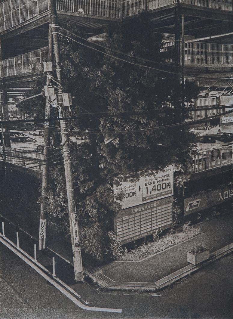 Cyanotype - Japan14