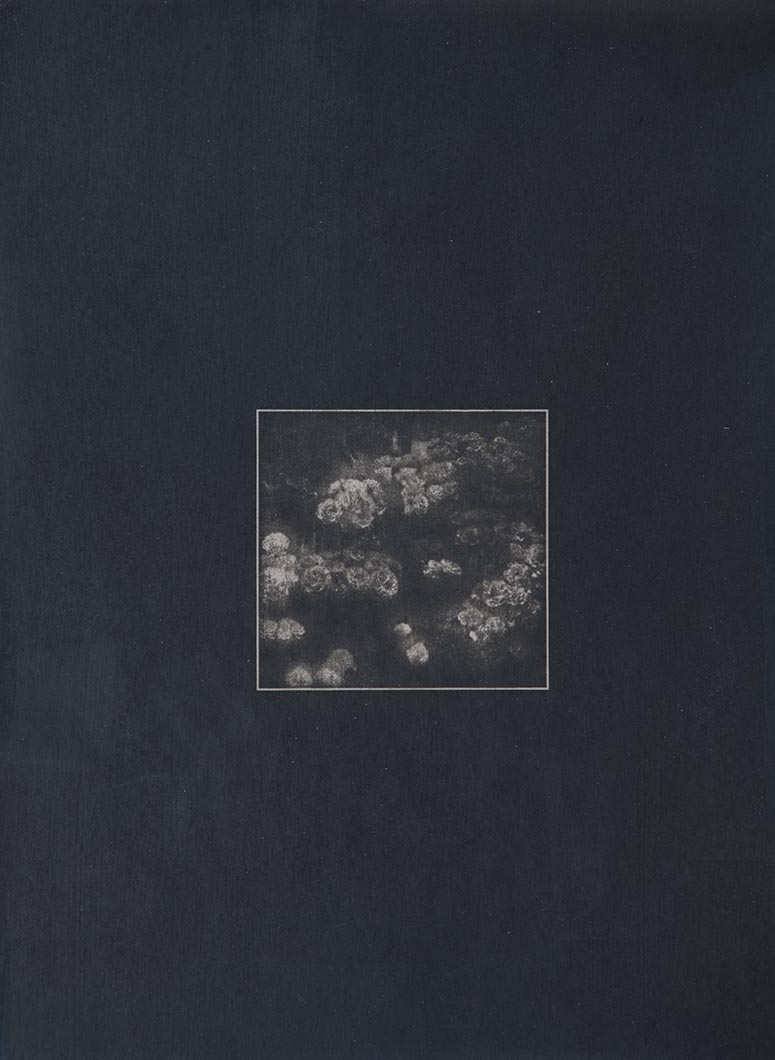 Cyanotype - Japan15