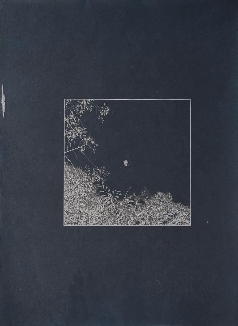 Cyanotype - Japan16