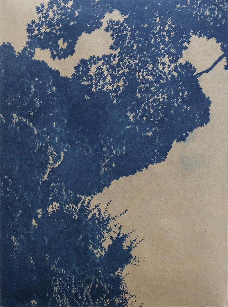 Cyanotype - Japan29