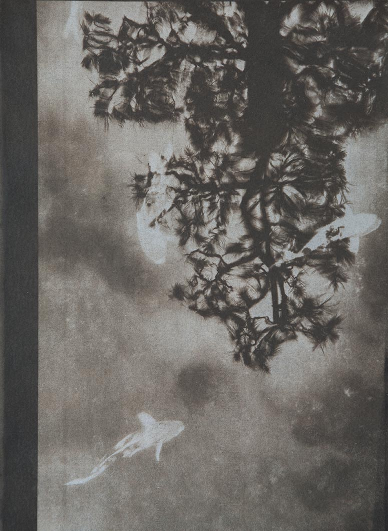 Cyanotype - Japan7
