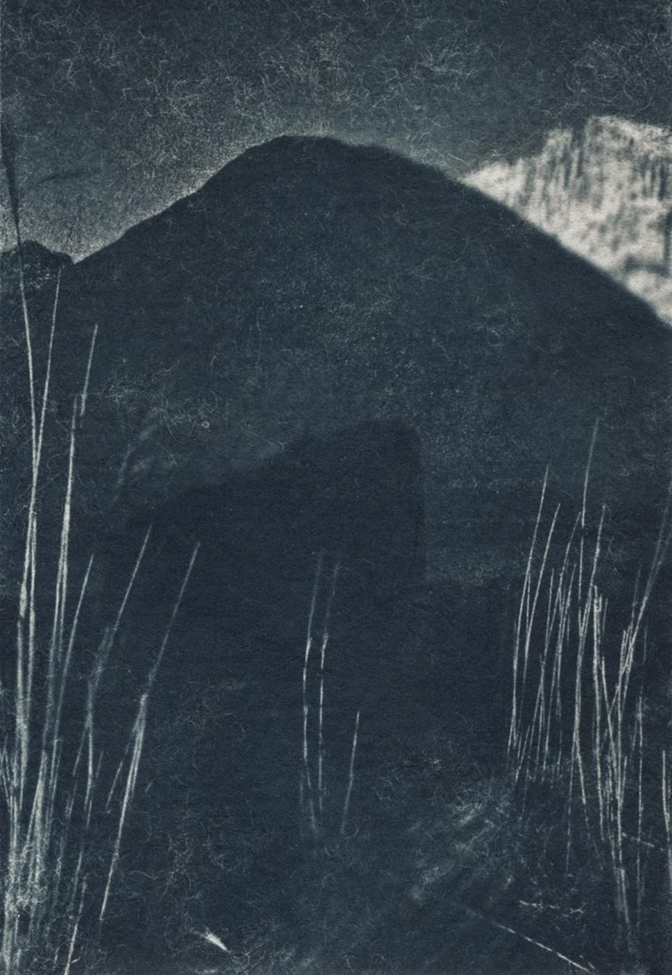 Cyanotype - Corona Trips